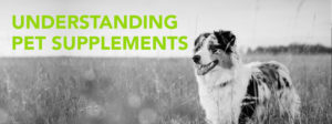 Improving Your Pet's Health Through Supplements