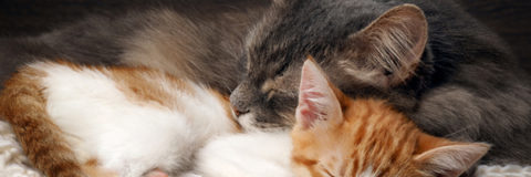 Solving the Pet Overpopulation Crisis