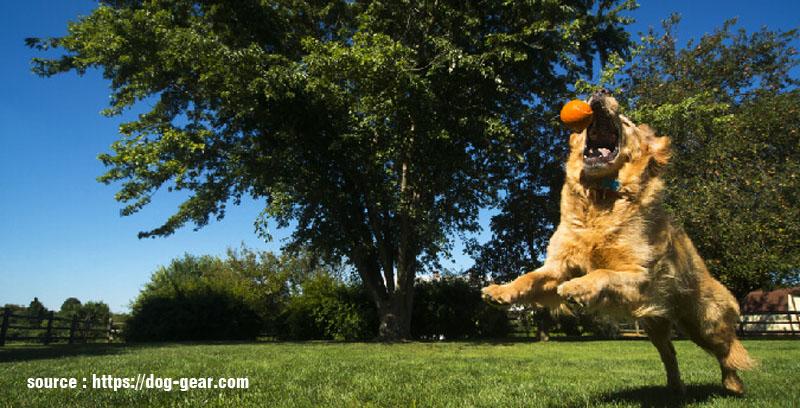 Tips on Training Your Dog