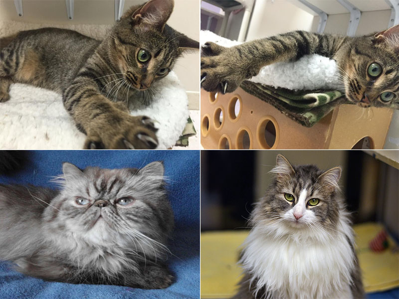 Finding the Cat of Your Dreams