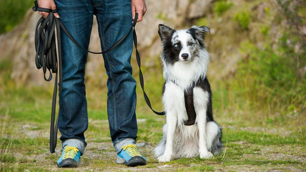 Dog Training For Puppies Carried out the appropriate Way