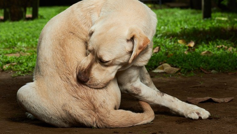 How to Minimize Your Pet Allergies