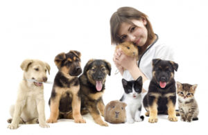 Improving Animal Health Through Vets For Pets