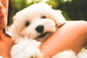 Pets and Divorce - How to Keep Fifi and Fido in the Family