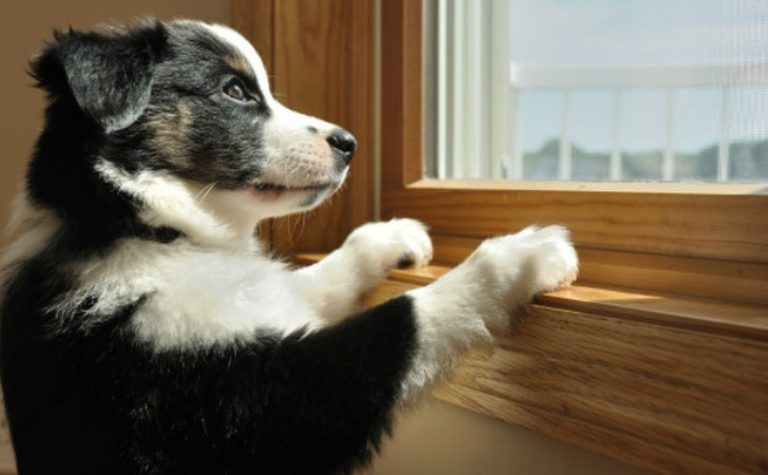 Top Ways to Keep Your Dogs and Cats Entertained
