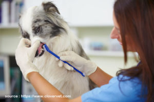 Taking Care of Your Pet's Teeth