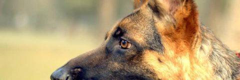 Facts About Dogs Everybody Loves Hearing All the Time