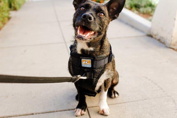 Explore Some Necessary Pet Accessories