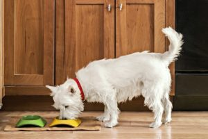 Things Prospective Pet Owners Need To Consider