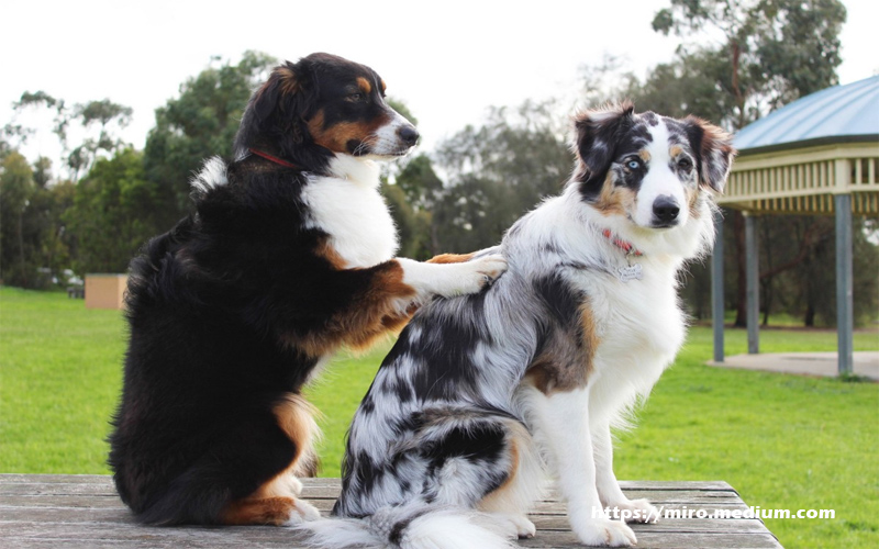 Massage - When You Should and Shouldn't Massage Your Pet