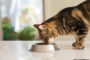 Finding the Best Needful Things For Your Pet Cat
