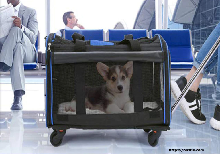 The Best Way to Carry Your Small Dog on a Plane