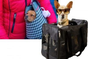 Earning by Making a Business Out of Pet Carriers