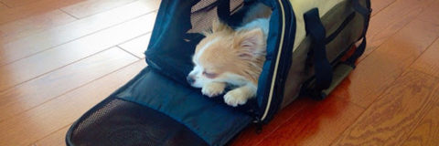 Information and Tips For Purchasing an Airline Approved Pet Carrier