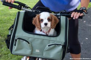 Practical Pet Carriers – Designer Quality at a Discount Price