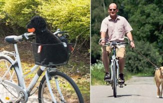 The Perils of Riding a Bicycle With Your Pet