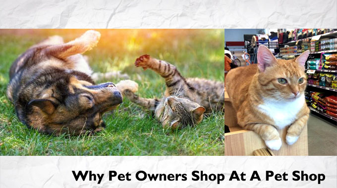 Why Pet Owners Shop At A Pet Shop