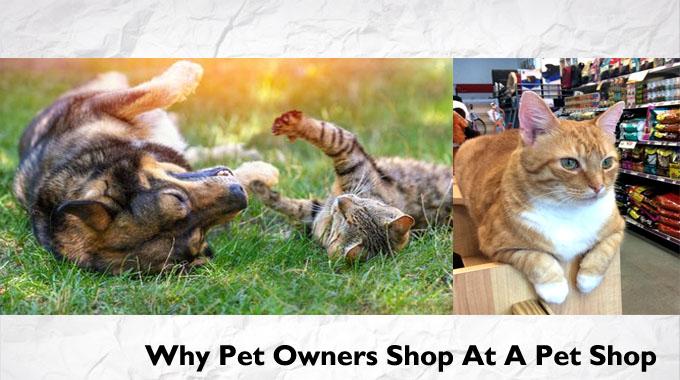 Why Pet Owners Shop At A Pet Shop