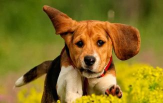 Family-Friendly Dogs Your Kids Are Sure To Love