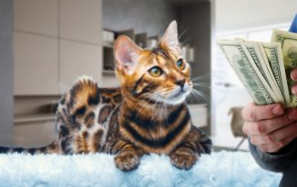 Is it Expensive to Own a Pet?